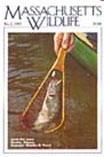 Massachusetts Wildlife Magazine - Local and RegionalUS magazine subscriptions