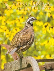 Virginia Wildlife Magazine Subscription